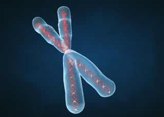 23chromosomes