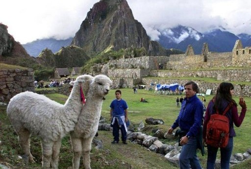 Llamas_machu_pichu_afp-512x345
