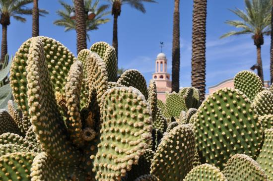 Fairmont cactus