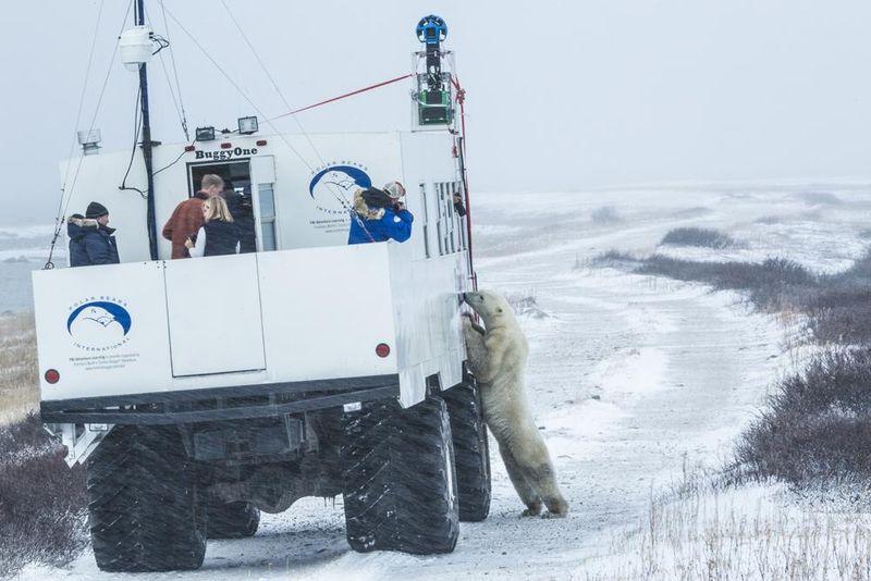 Google Polar