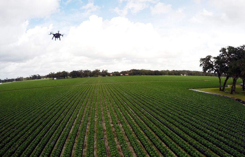 Drones Farming