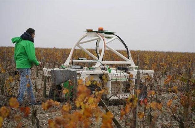 Ted vineyard robot