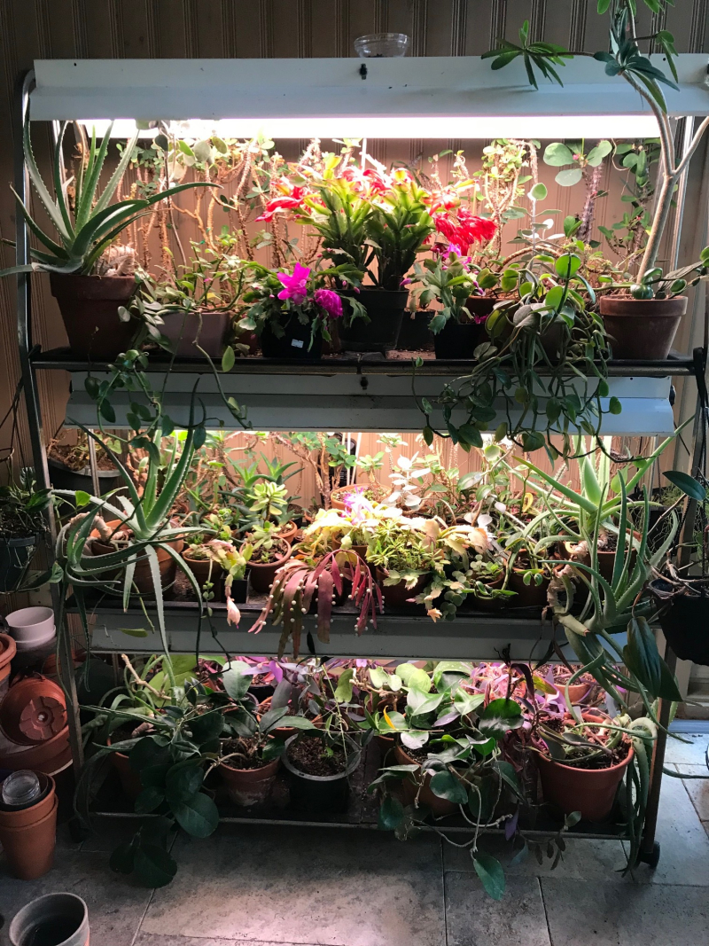 Laura Plant shelf