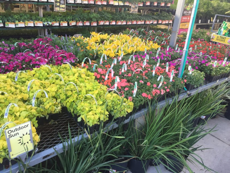 Lowes flowers