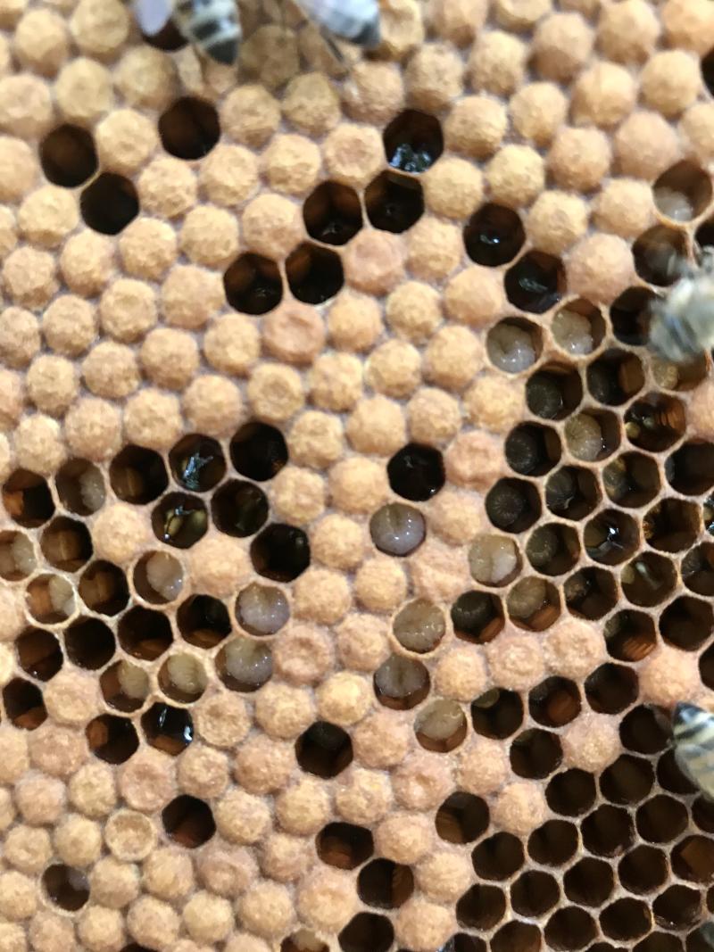 Barb Honeycomb