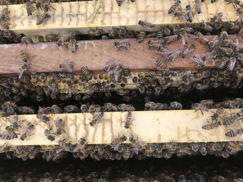 Barb honeycomb detail